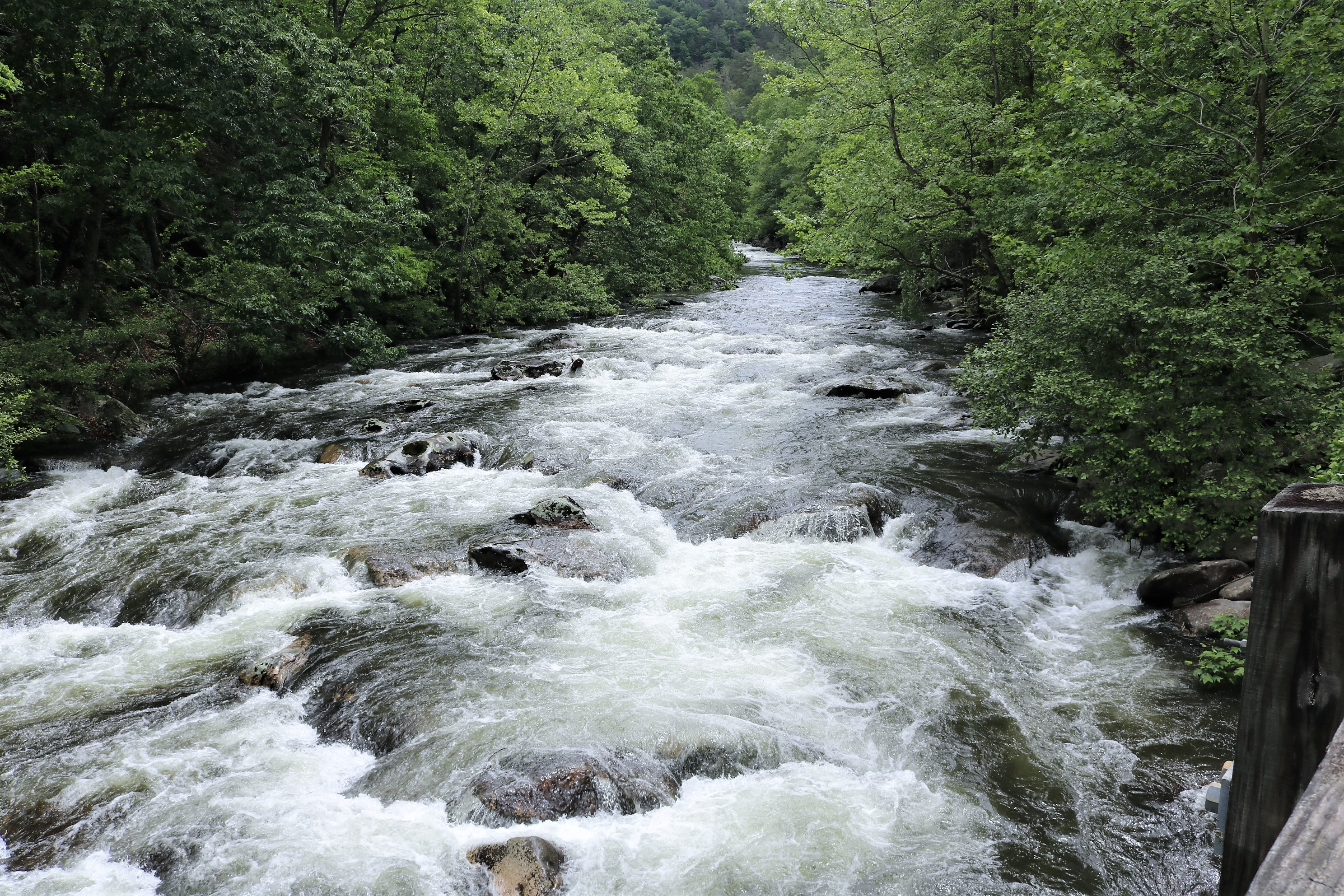 19 Tellico River Tn June Easing Along
